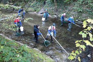Échantillonnage des poissons à la rivière Wigger. (Photo: EPFL)
